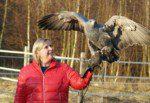 Führen auf Augenhöhe   ein Leadership-Erlebnis mit freifliegenden Greifvögeln!